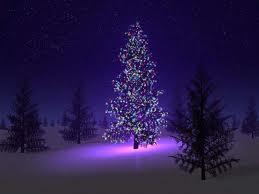 400_kerstboom_verlicht.jpg